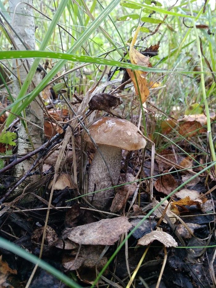 Мои грибочки Грибы, Осень, Красота, Длиннопост