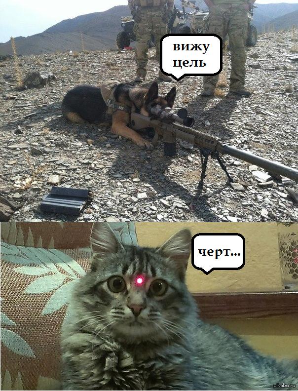 Цель вижу картинка с котом