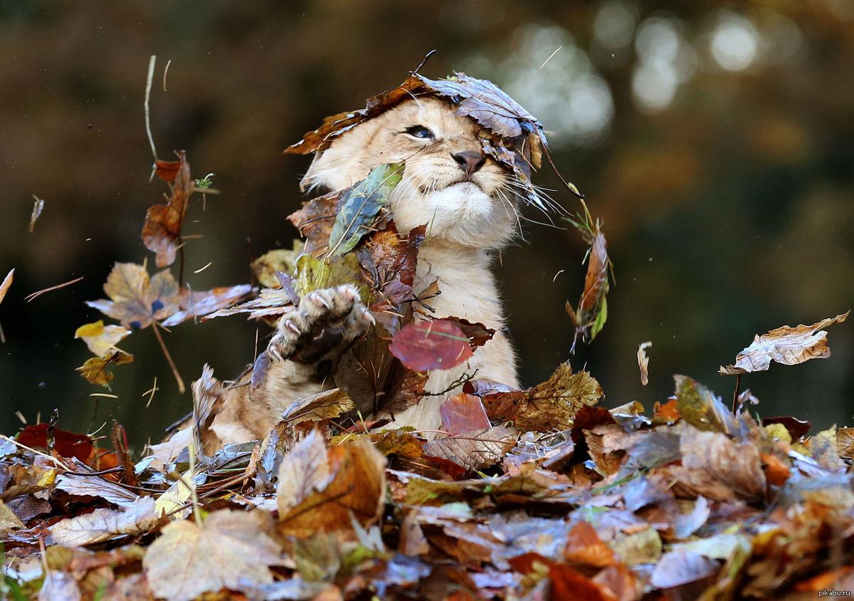 картинки про осень очень смешные стоит оговориться