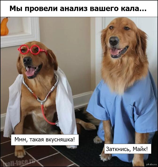 Картинки приколы мемы про собаку, полгода девочке открытки
