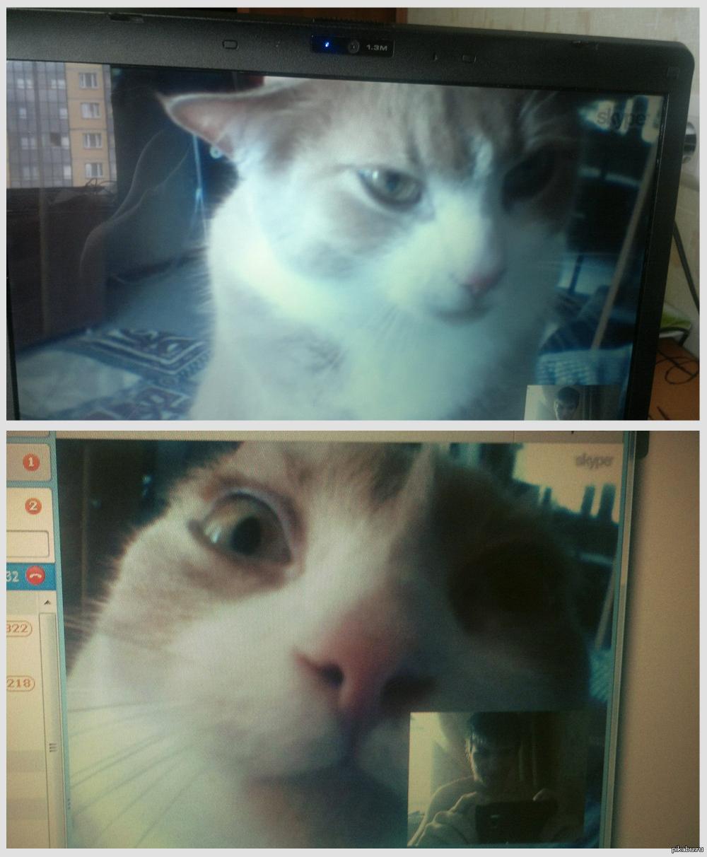 Как сделать кота в скайпе фото 389