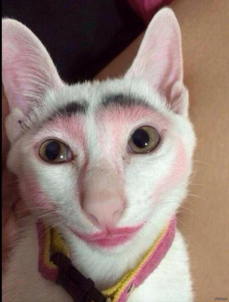 кошку накрасили картинки если