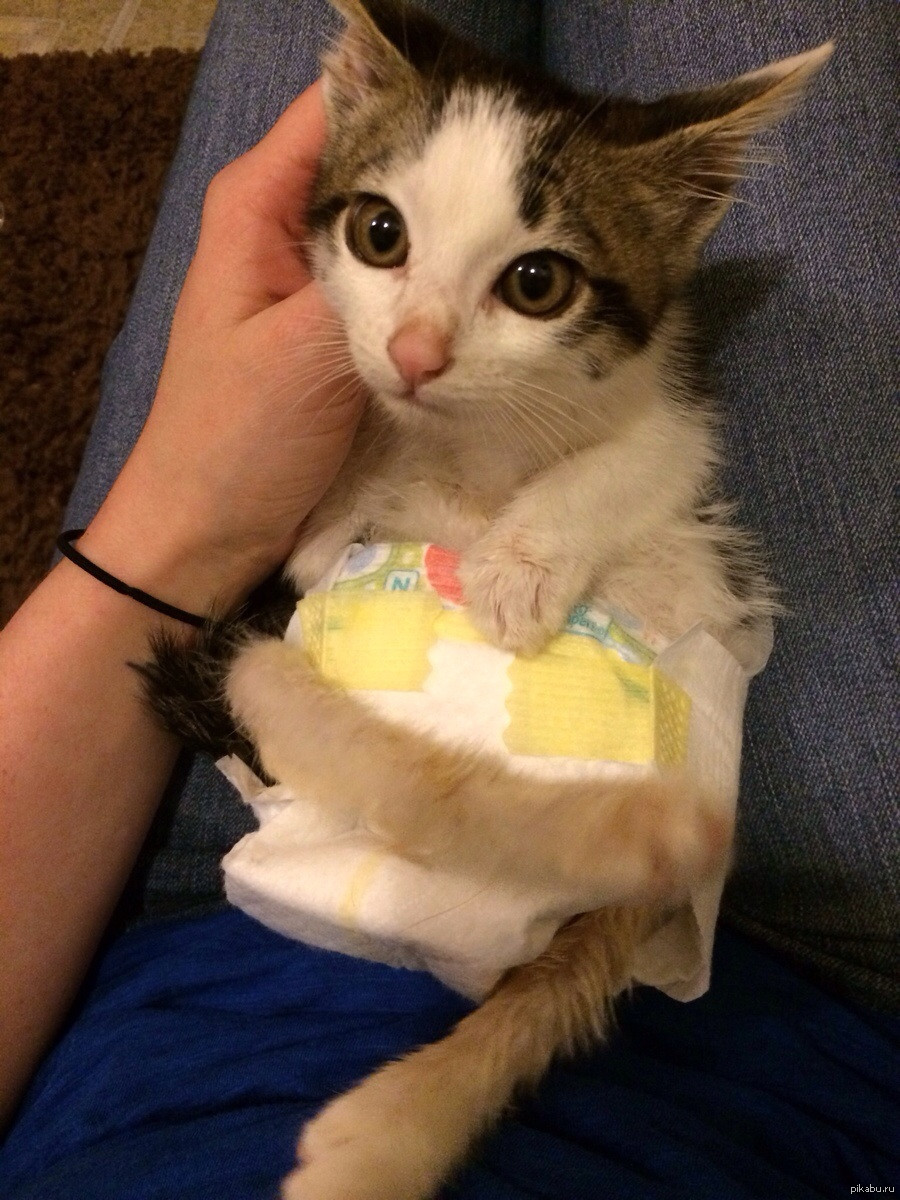 многие картинка кошка в памперсе вам