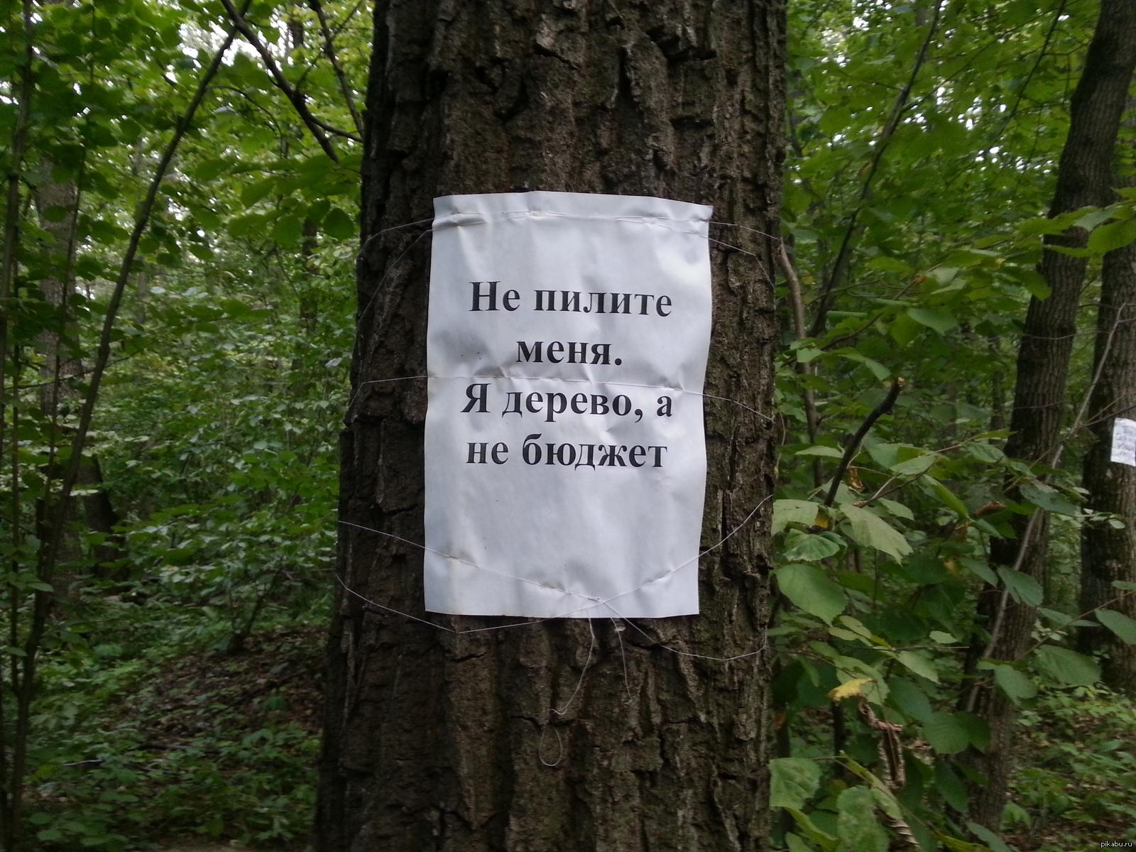Картинки и приколы про лес