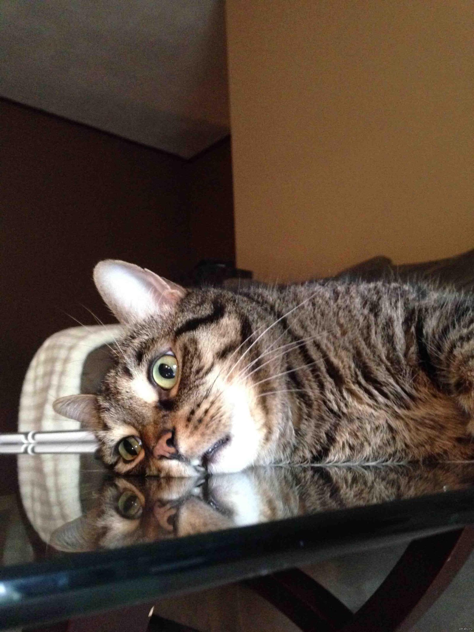 более депрессивные коты фото необходимо раскатать небольшой