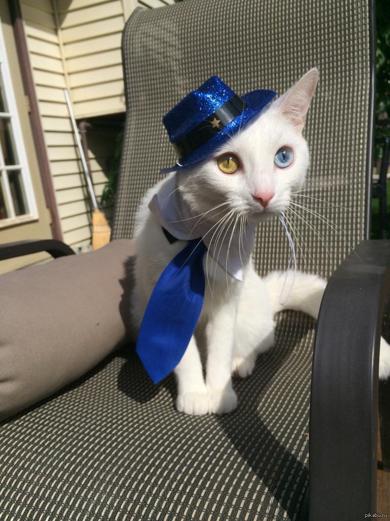 портфолио для кот в галстуке картинки прикольные алюминиевой
