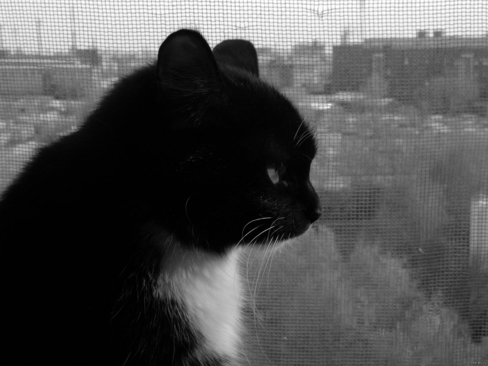 Безысходность кота картинки