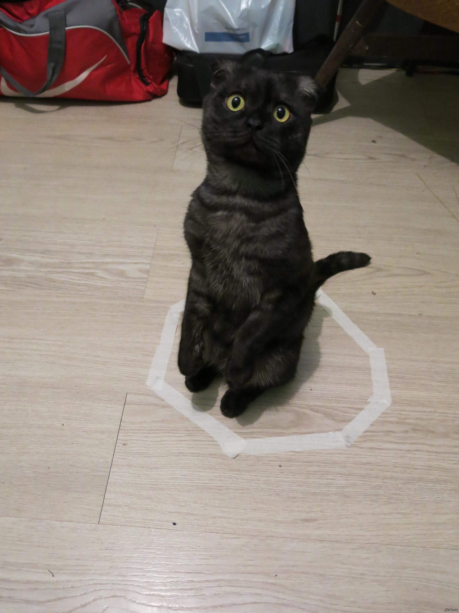 От чего кот наэлектризован