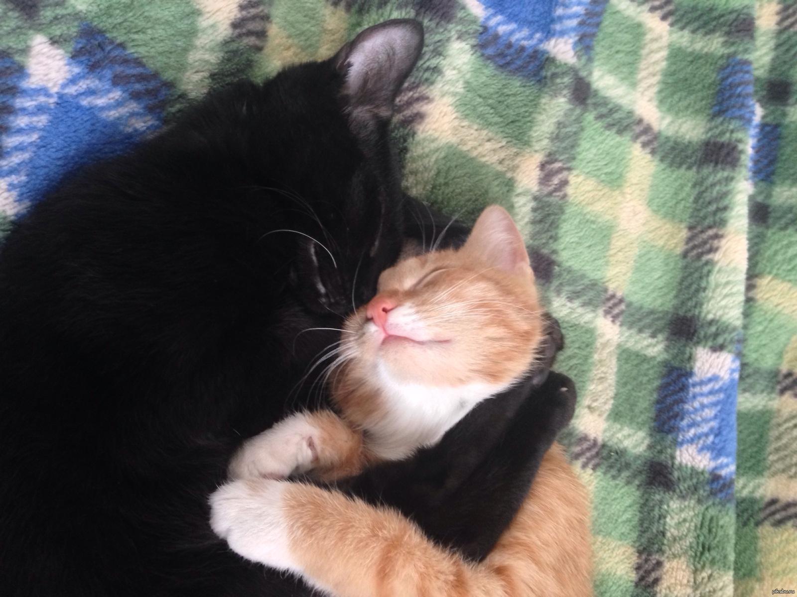 фото кошачья любовь