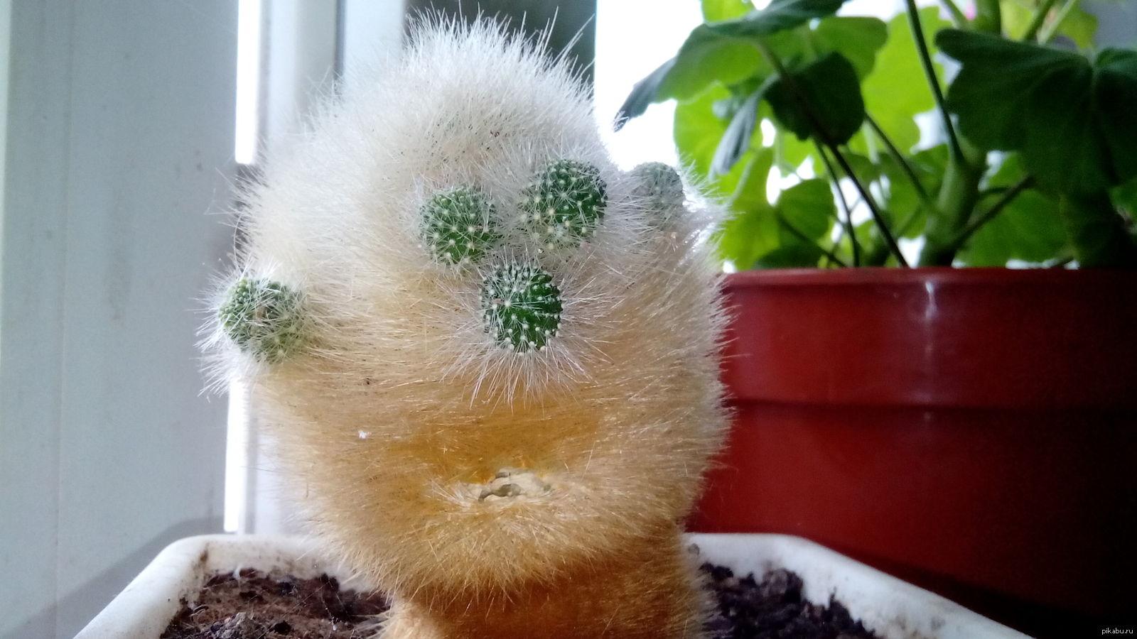 Комнатные растения прикольные картинки