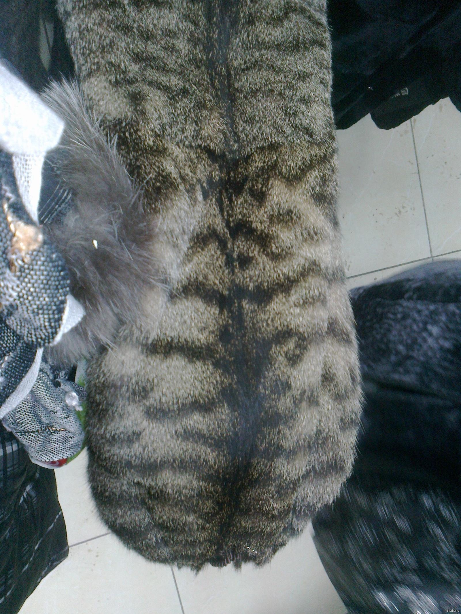 Шубки для котов