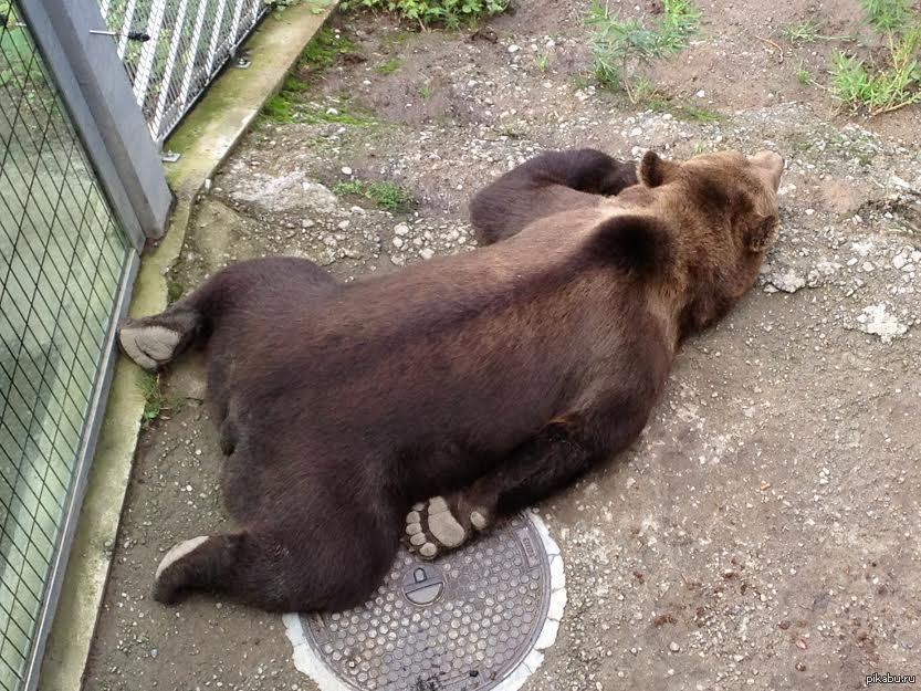 Уставший медвежонок картинки