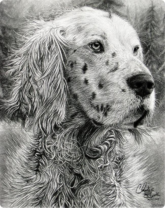 Нарисованные картинки собак карандашом, днем рождения сериалы