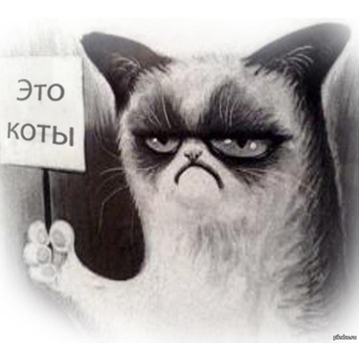 Вискаря бы картинка с угрюмым котом