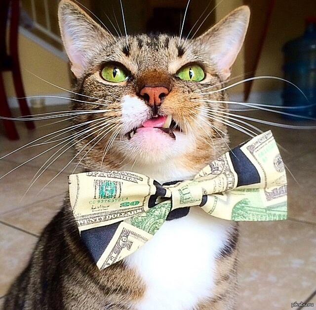 Картинки коты бандиты