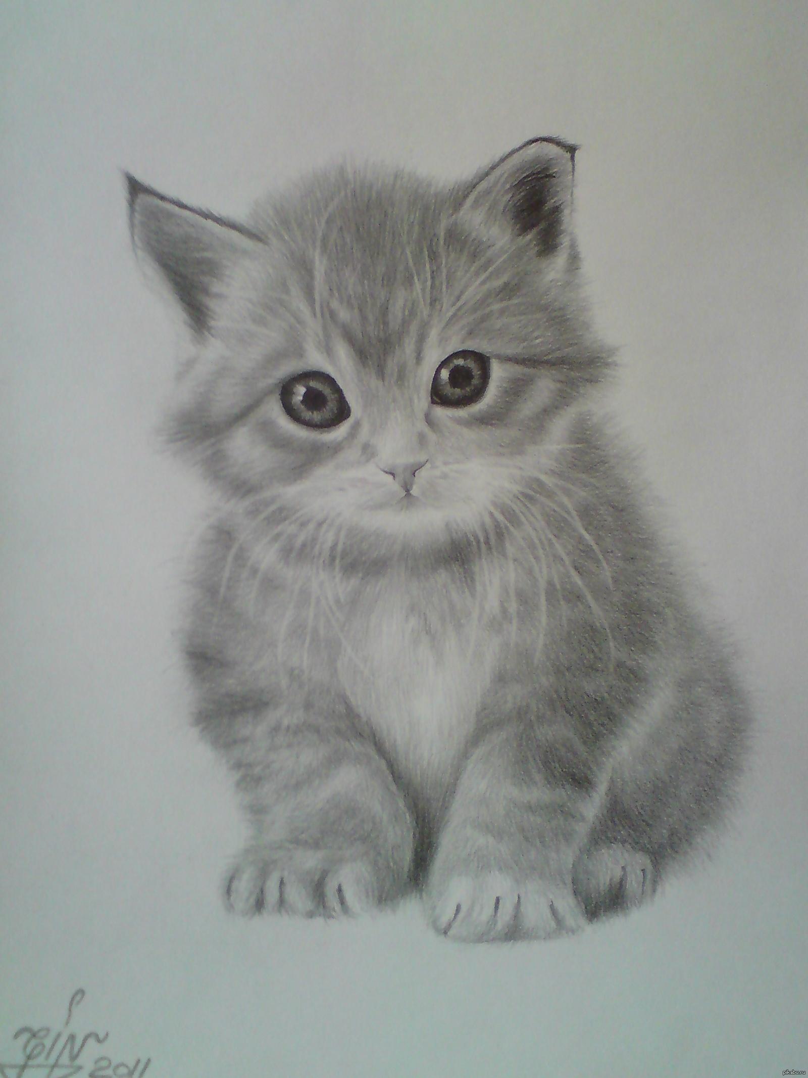 занимает особенное картинки как нарисовать простым карандашом котят времена мужчины