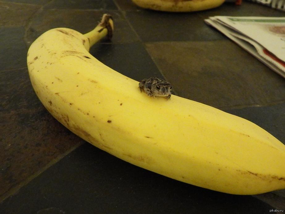 фото приколы бананы
