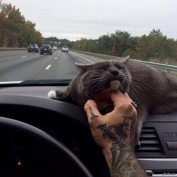 Человек превратится кота