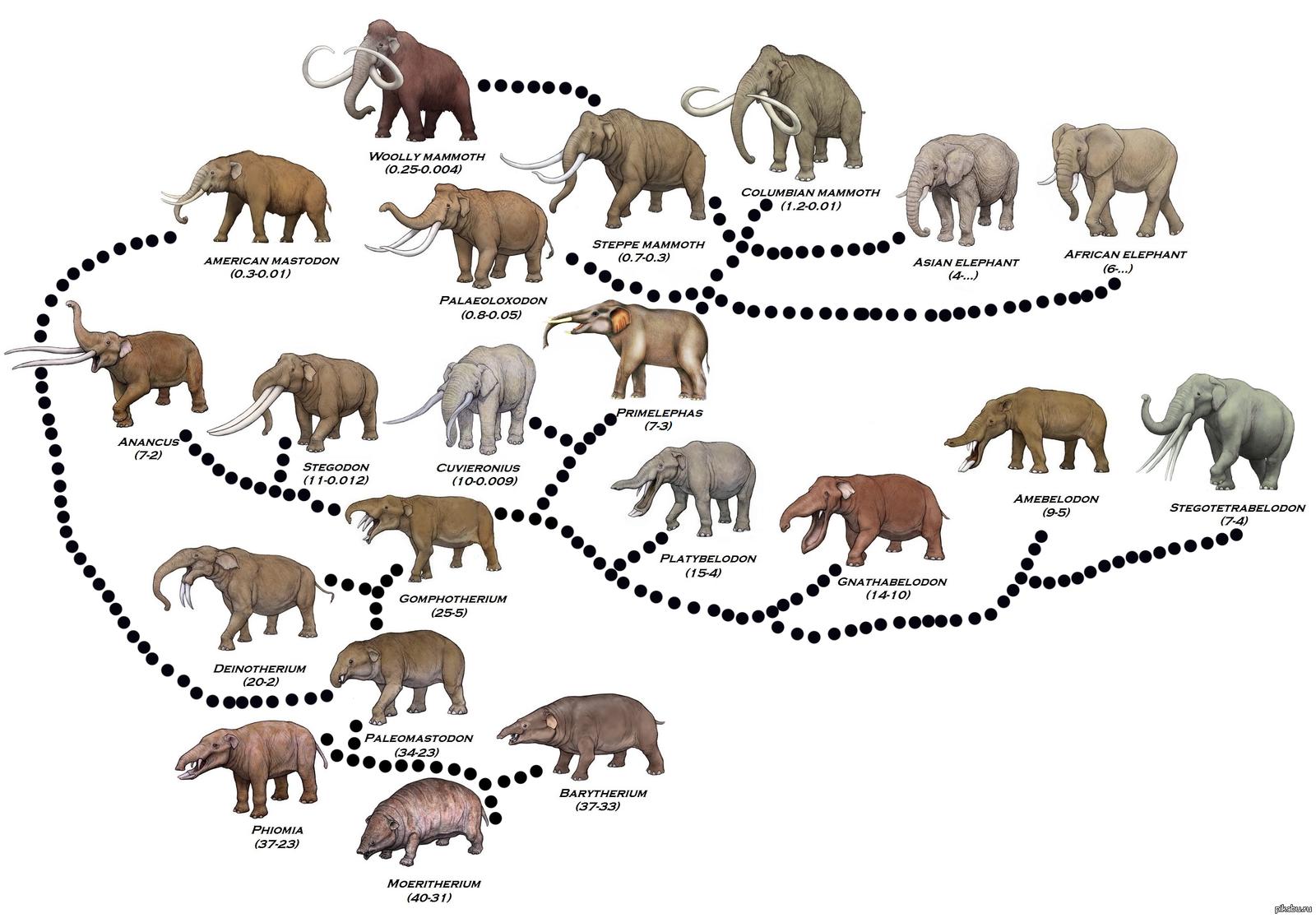 evolution of animals - HD1600×1116