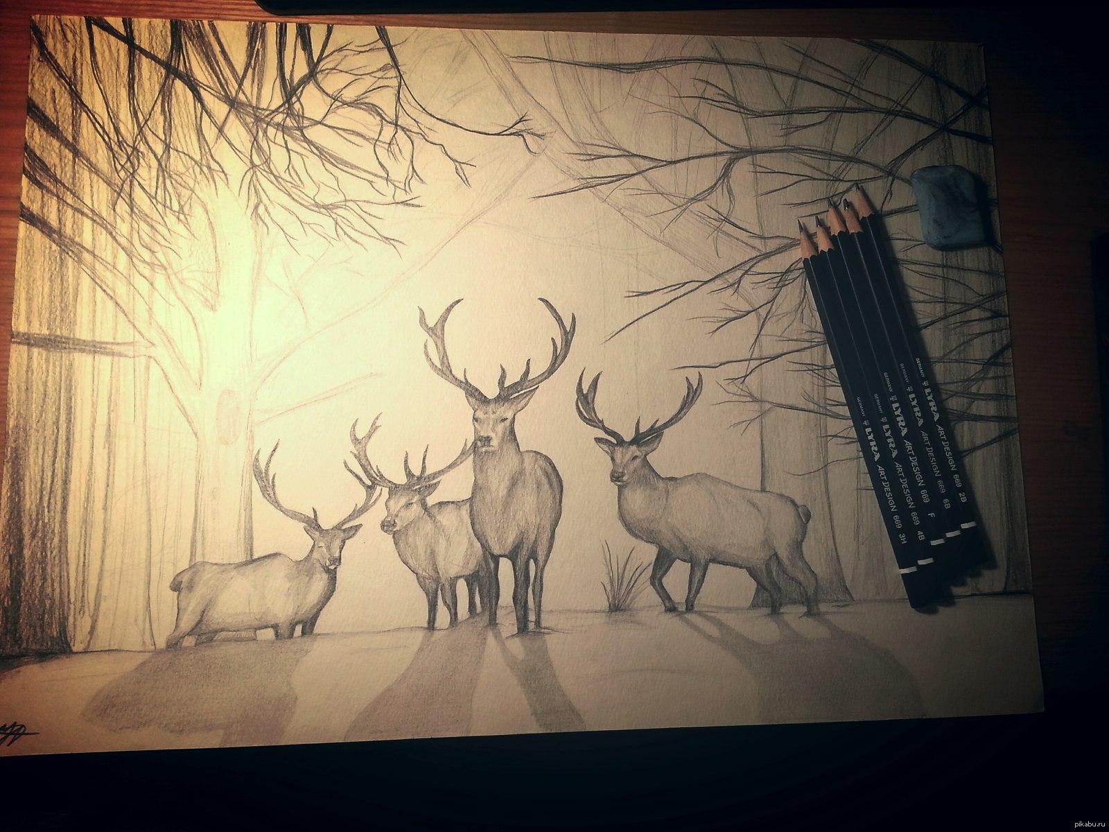 Рисунки животных в лесу карандашом для срисовки