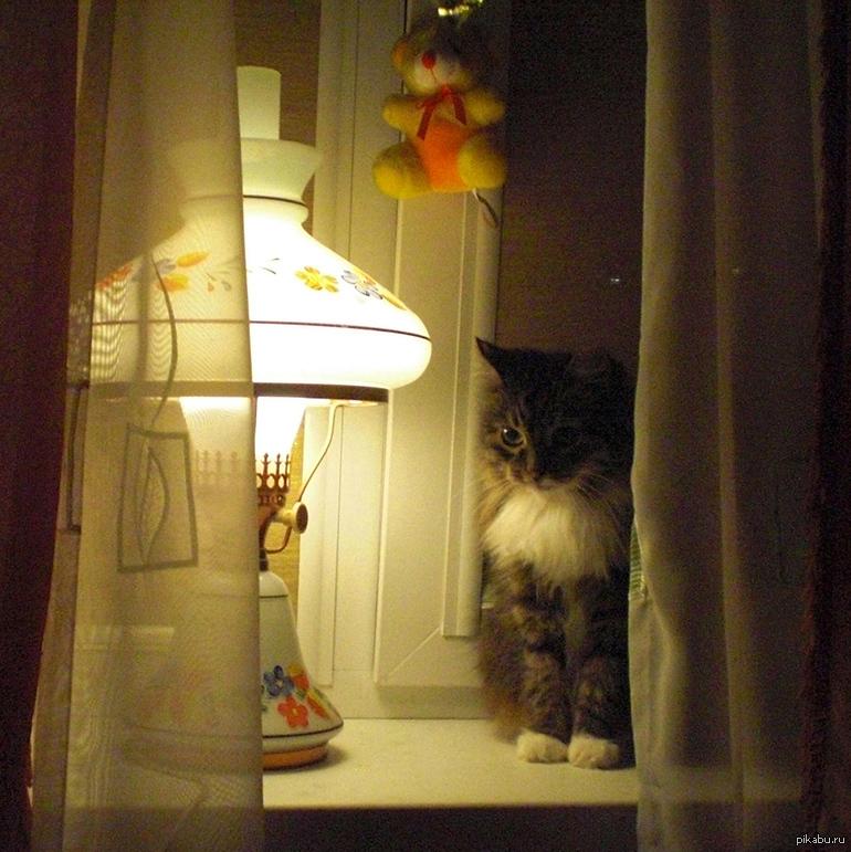 корпорация ламповые картинки атмосфера котики такую жару, какая