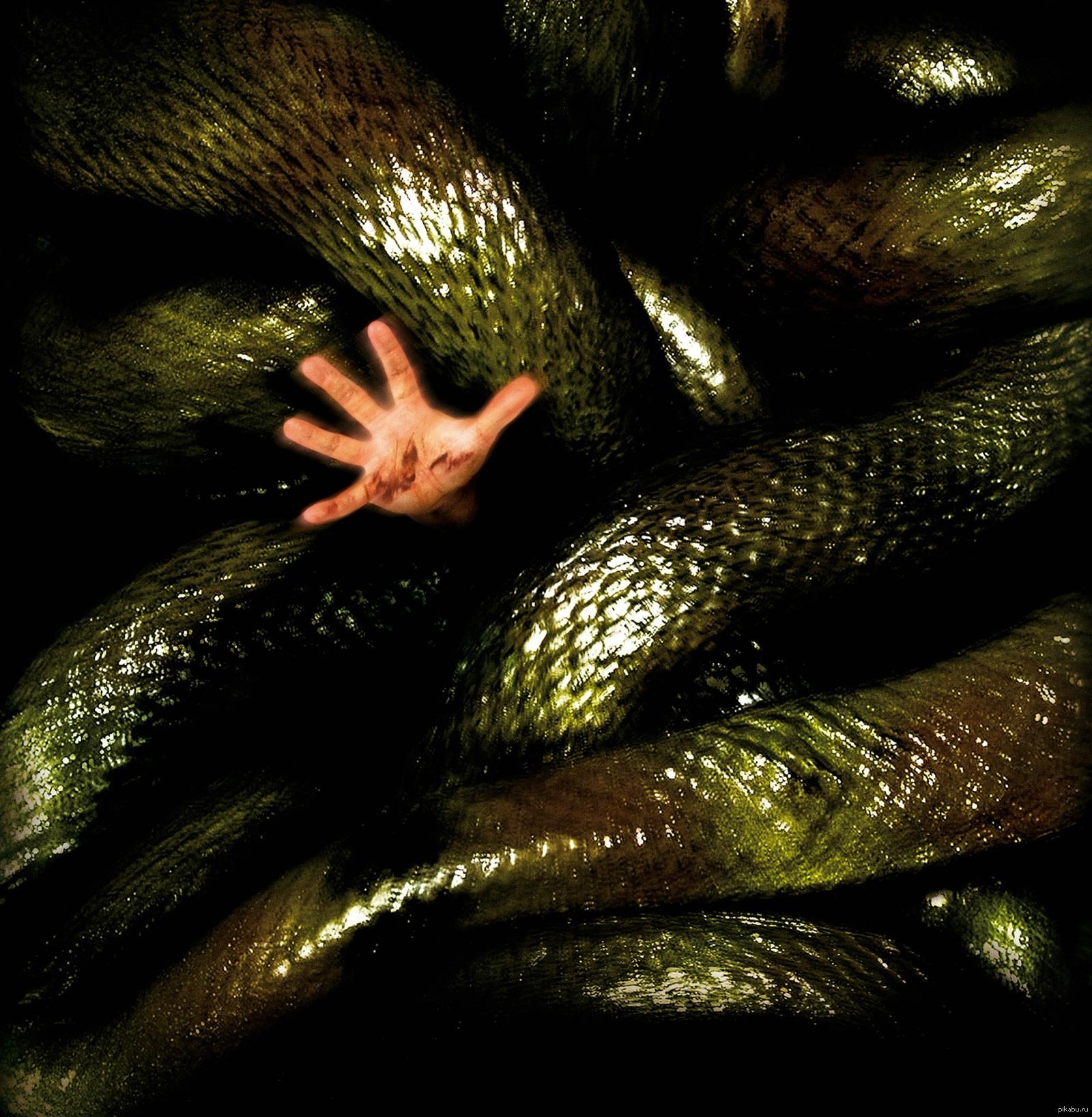 склочный коллектив картинка со змеями фотографиях