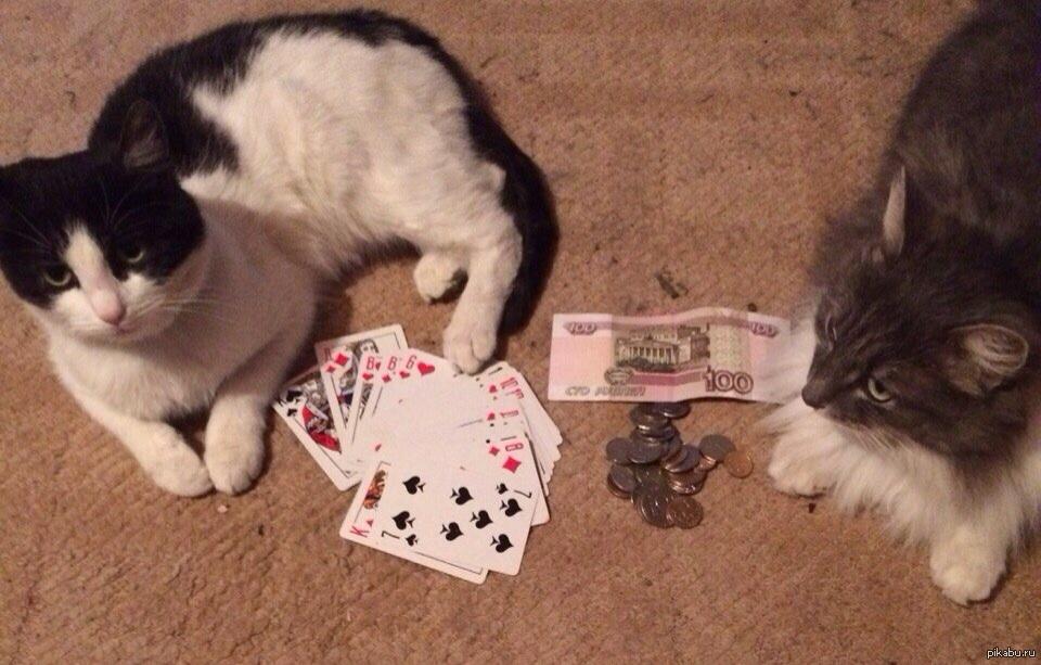 Играть в кота карты игровые аппараты в аренду в