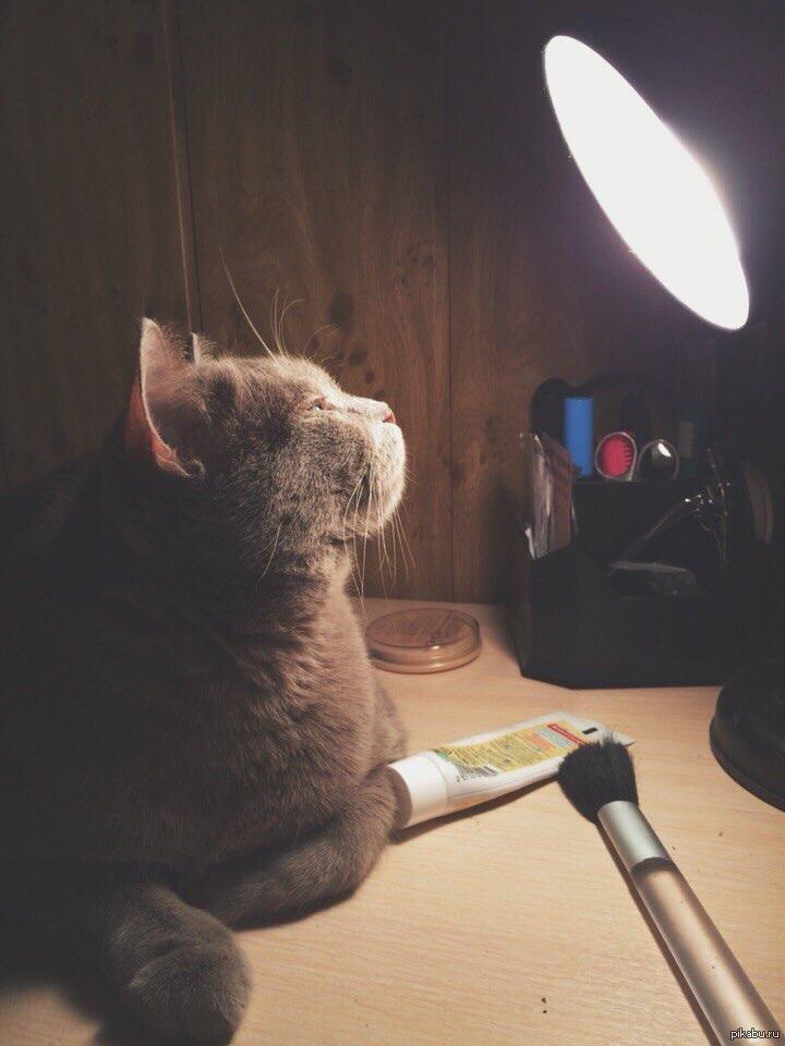 этого ламповые картинки атмосфера котики честно положим весы