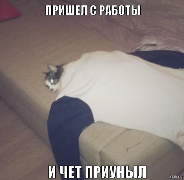 Фото гифка одуванчиков
