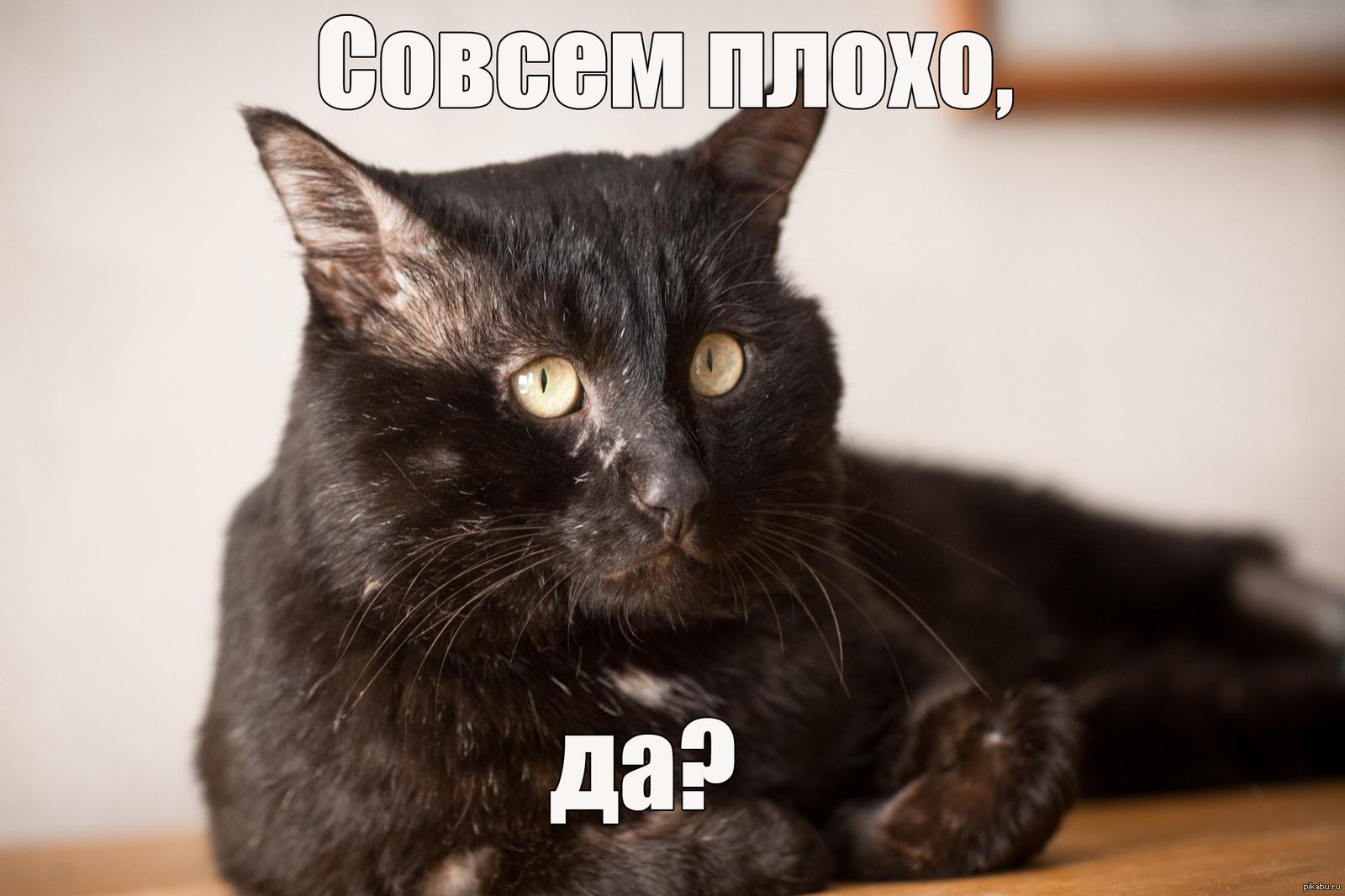 Прикольные матерные картинки с котами