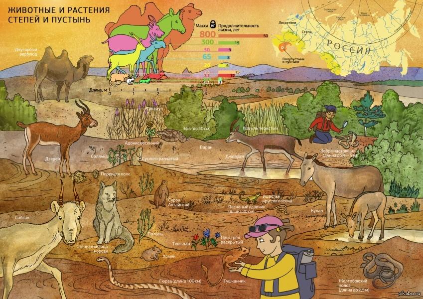 картинки животных и растений природных зон приготовить качестве