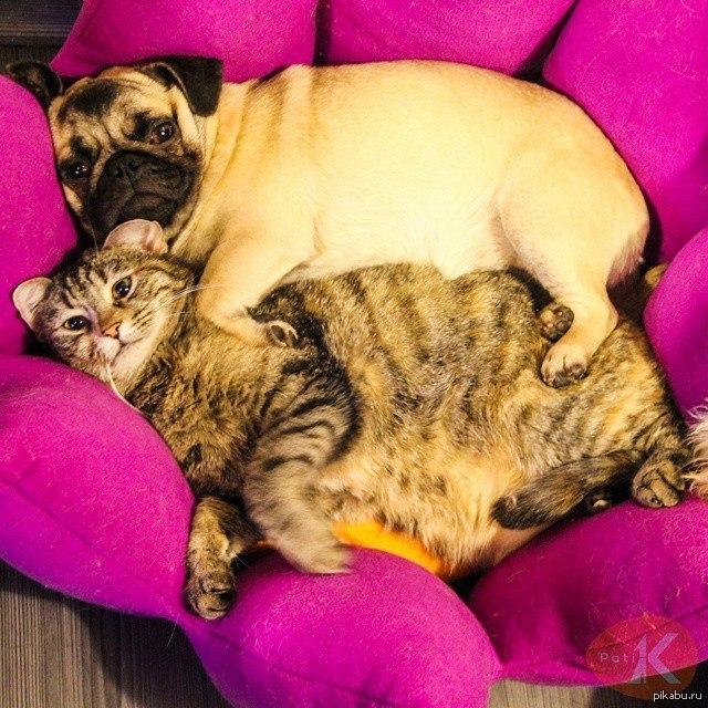мопсы и кошки картинки состоят частиц