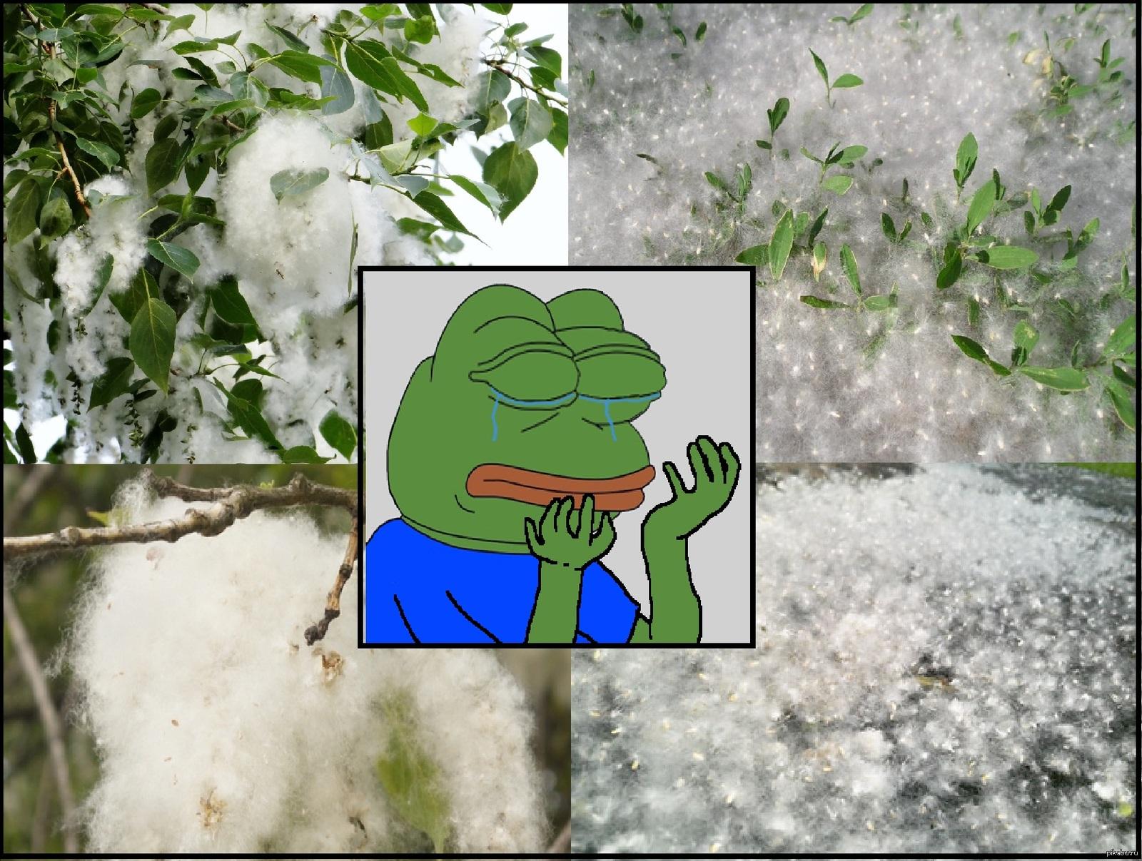 тополиный пух картинки