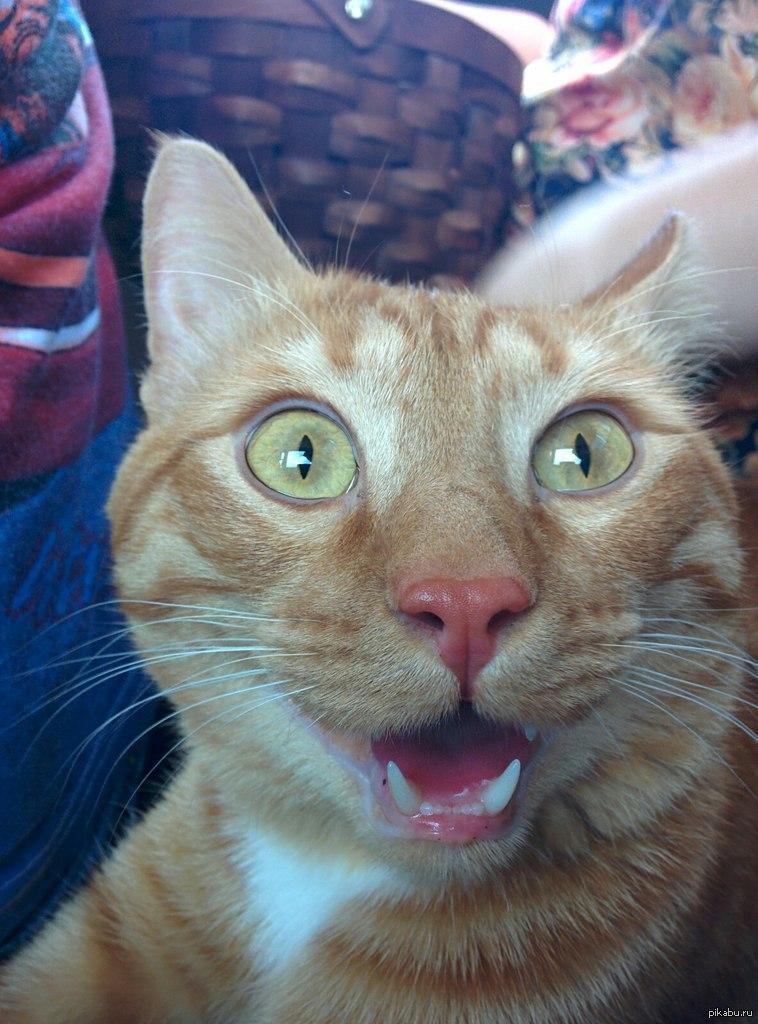 Картинки с упоротыми котами