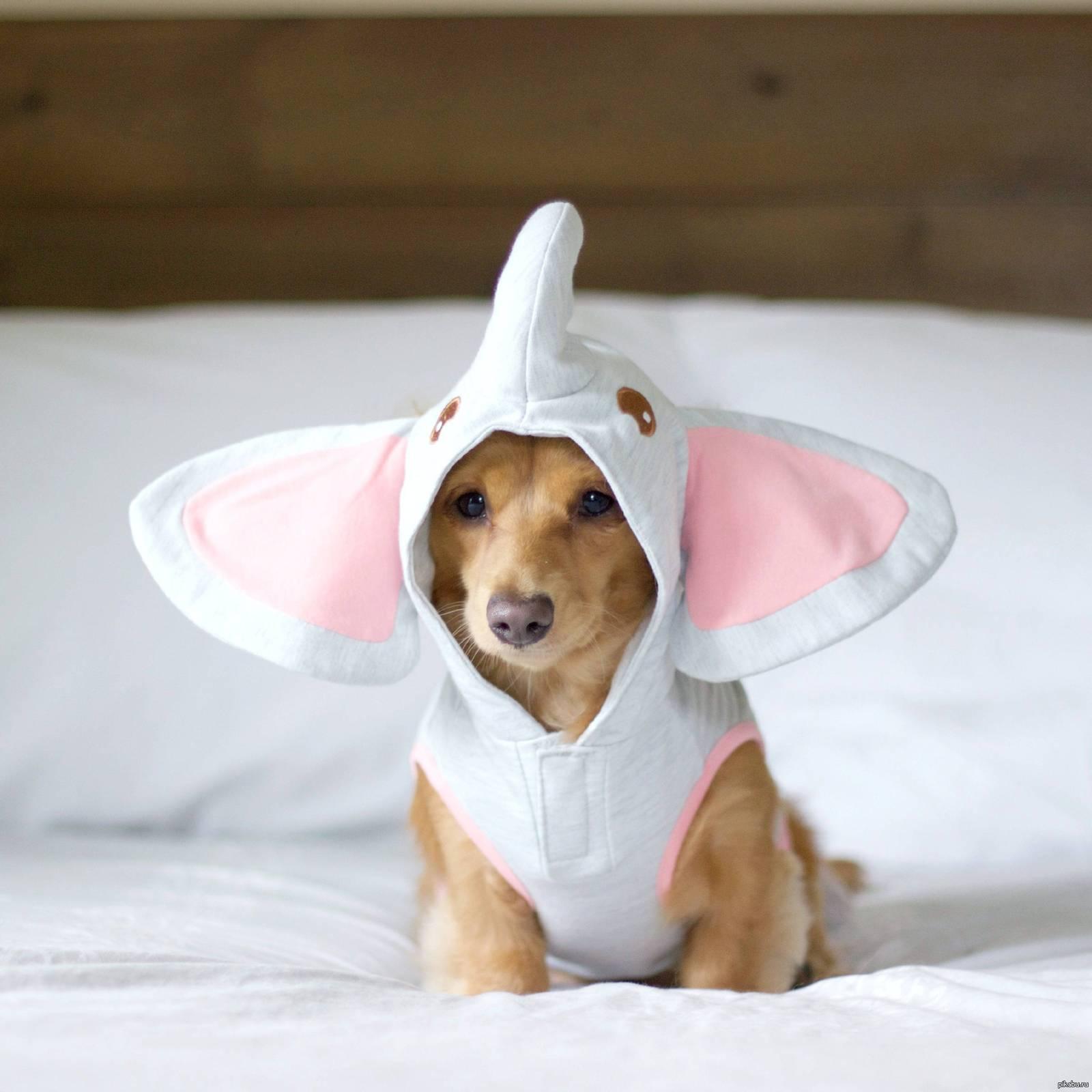 Картинки собак и щенков смешных, день рождения