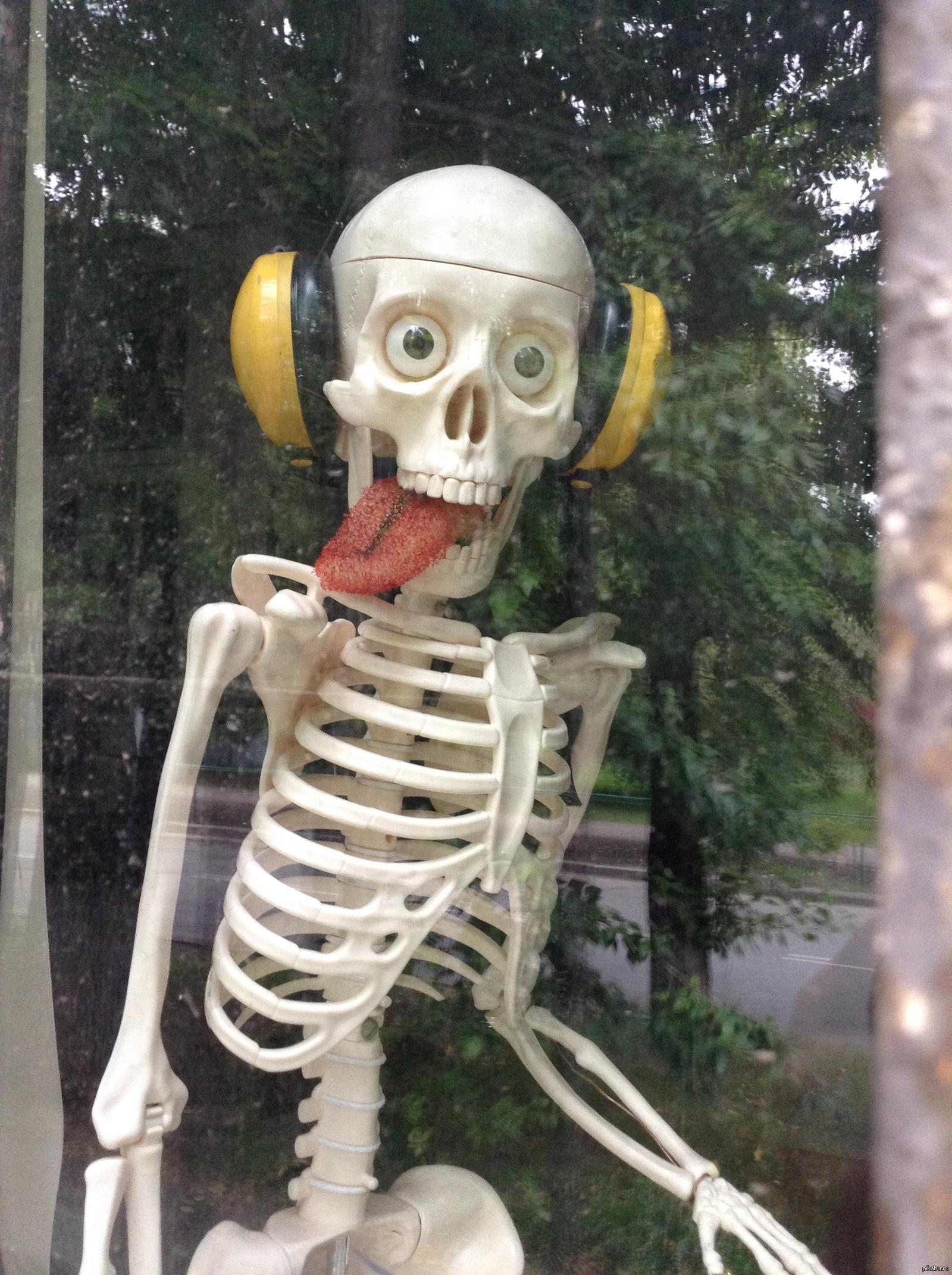 Смешные картинки со скелетами, загрузить свою