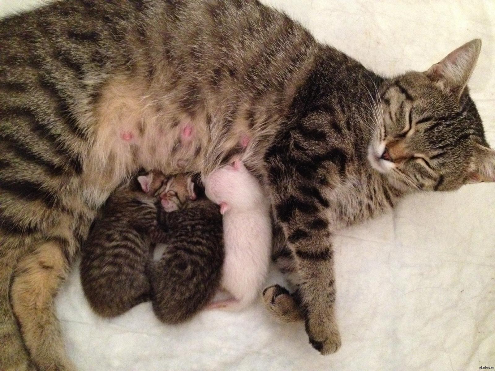 Беременна фото с котятами