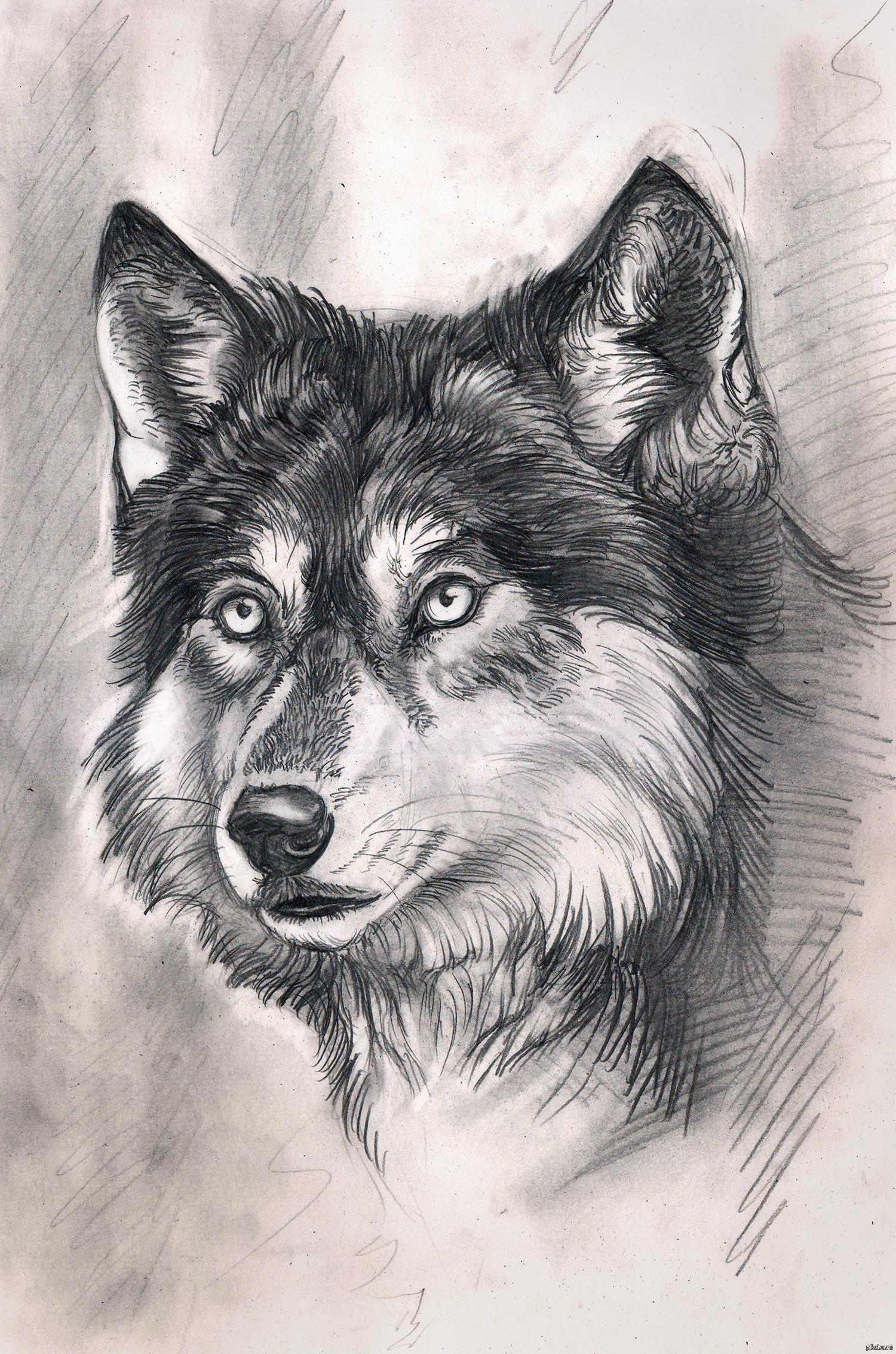 Красивые картинки волков нарисованных