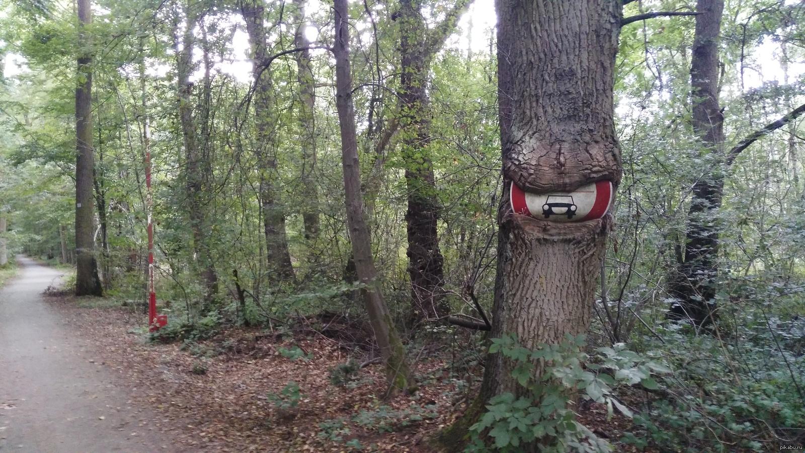 Картинки и приколы про лес, надписью желаю