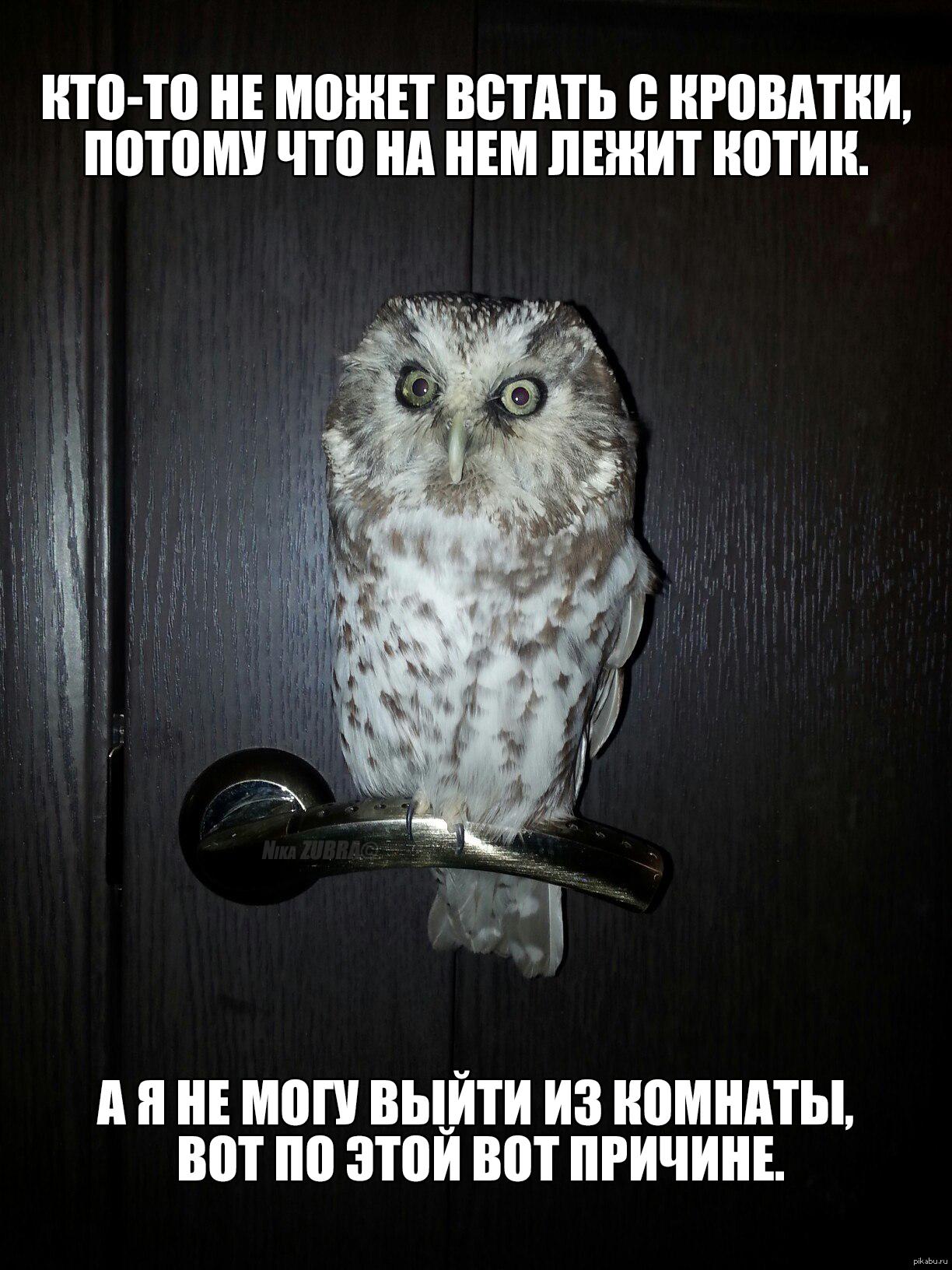 Мемами, картинка сова с надписью