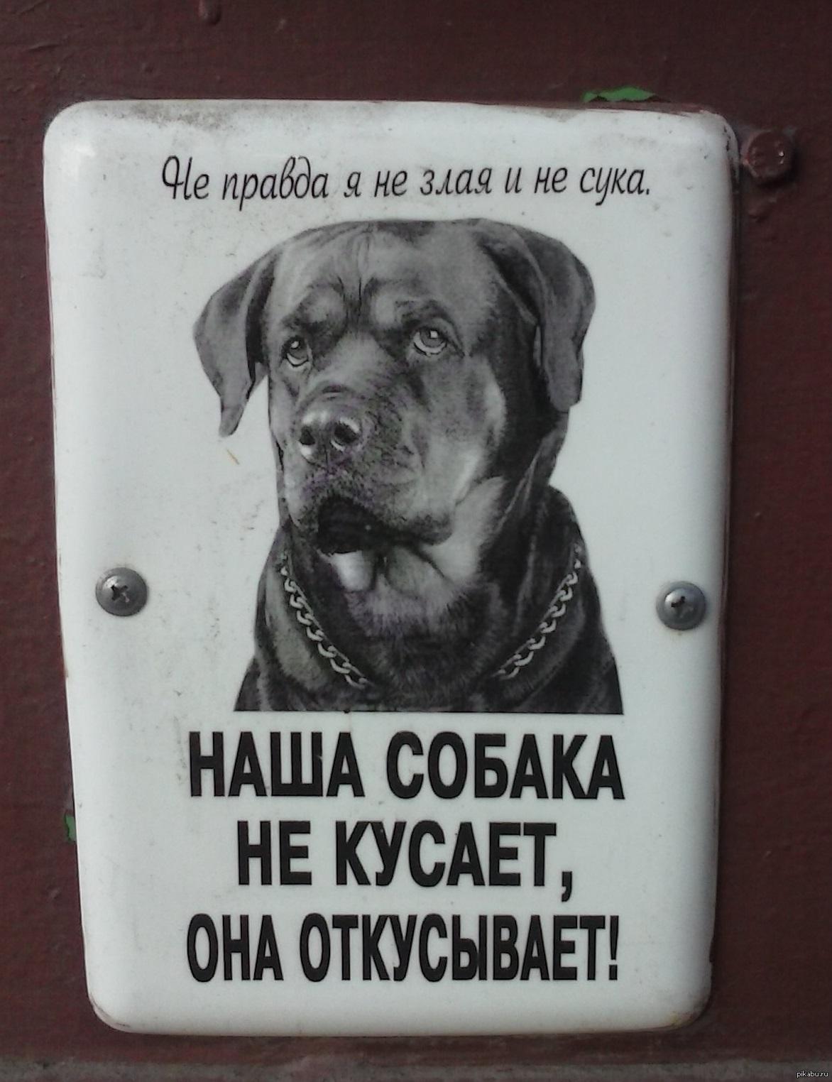 Смешная картинка злая собака