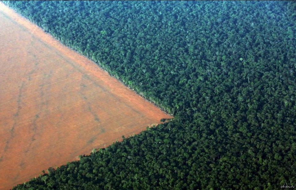 Картинки по запросу вырубка лесов за и против