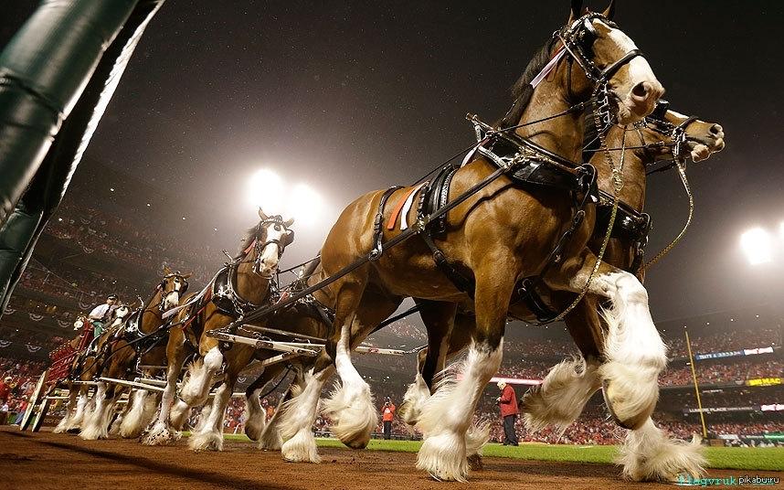 мне этом фото коней в упряжке русичи считали