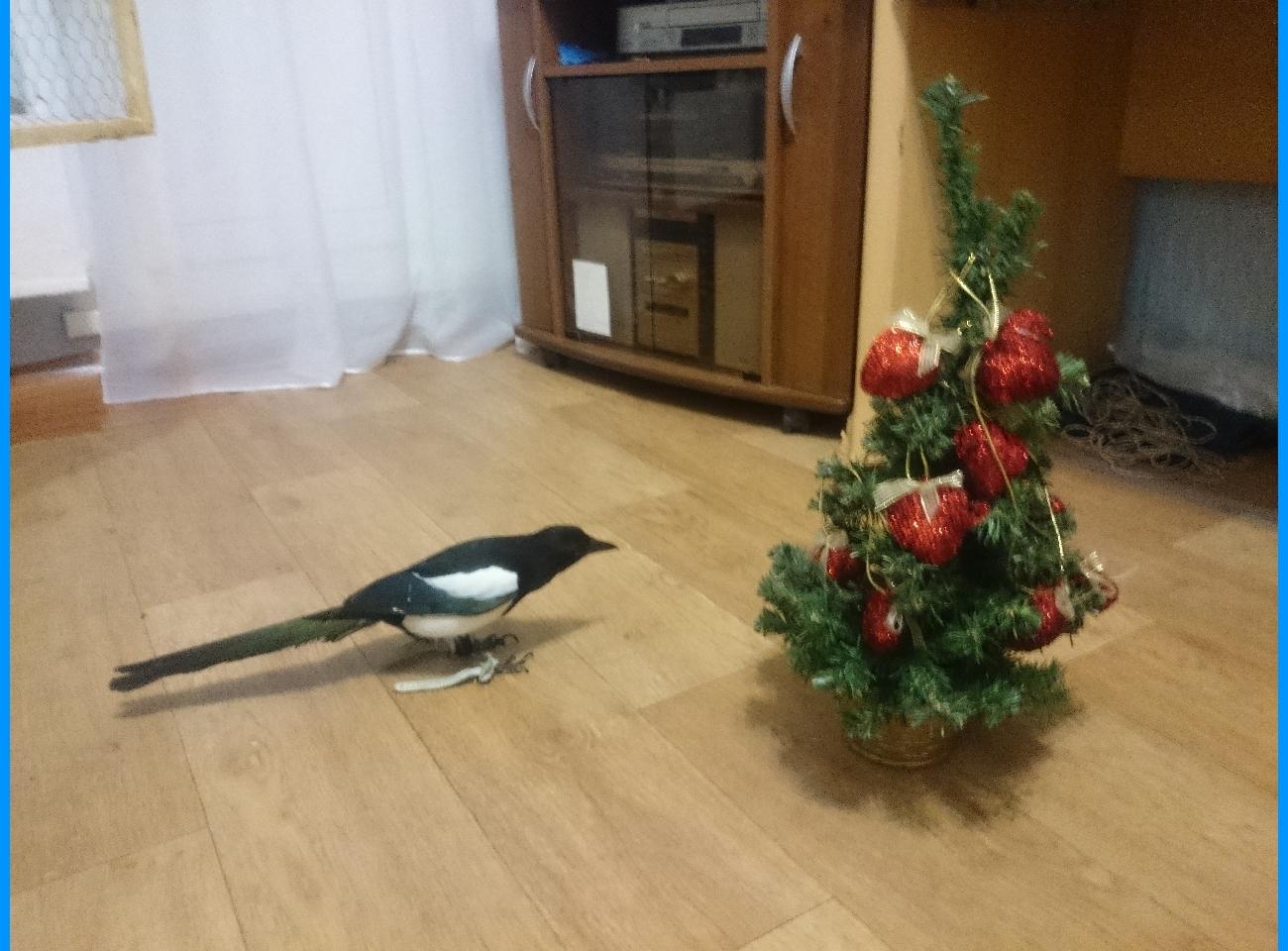 Птица на Новый год изоражения