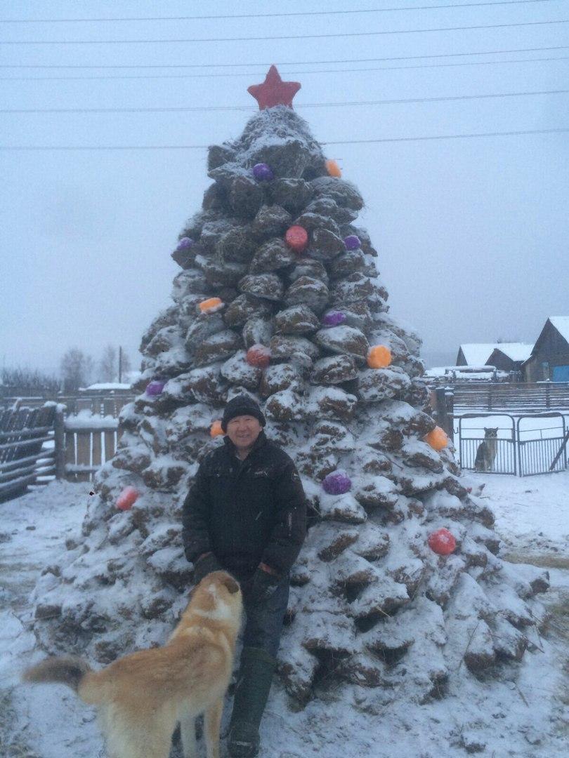 Головну новорічну ялинку України урочисто відкрили на Софійській площі в Києві - Цензор.НЕТ 4438