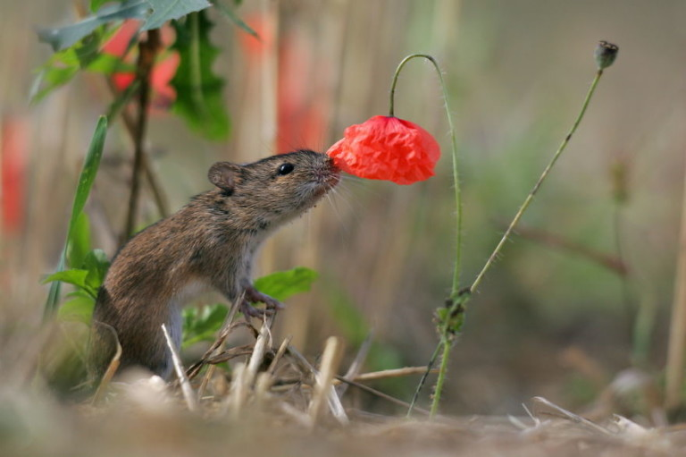 Картинки по запросу Милые животные: Как животные нюхают цветы