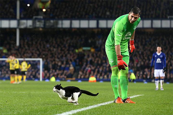 Видео о коте на футболе