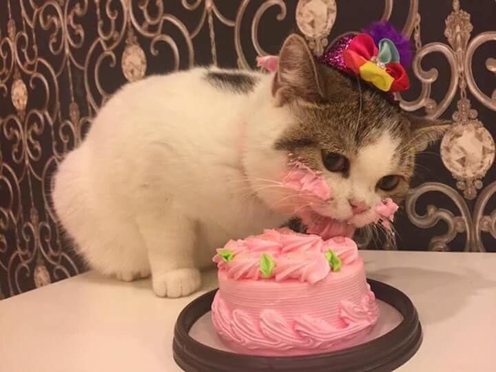 Коты не едят торты