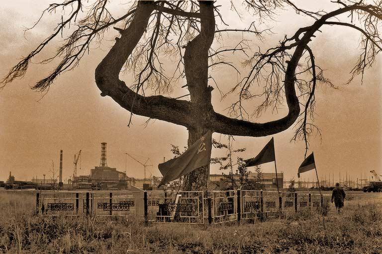Αποτέλεσμα εικόνας για дерево, радиоактивность Чернобыль