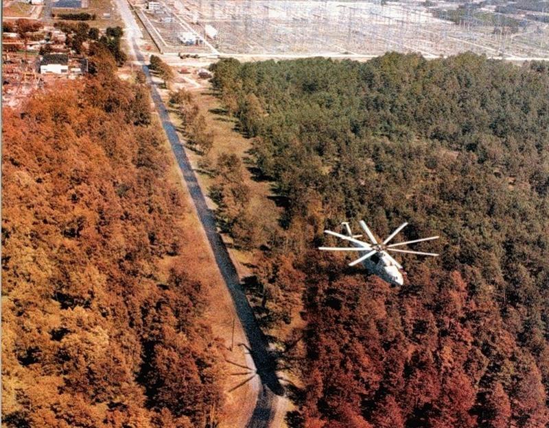 Картинки по запросу Чернобыльский лес